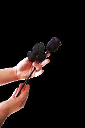edp rose