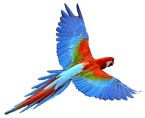 Flying-Parrot-PNG-Transparent-Image
